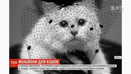 Кошка модельера Карла Лагерфельда может получить наследство в двести миллионов