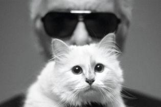Кошка Лагерфельда может получить 200 миллионов долларов. Что происходит, когда наследство оформляют на животных