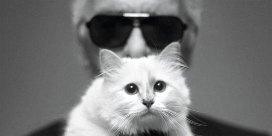 Кішка Лагерфельда може отримати 200 мільйонів доларів.Що відбувається, коли спадок оформлюють на тварин