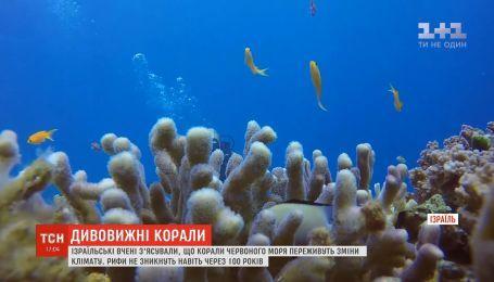 Израильские ученые выяснили, что коралловые рифы Красного моря переживут перемены климата