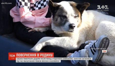 В США собаку вернули домой после 100-дневного исчезновения