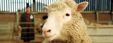 """Хроніки клонування: від вівці Доллі до """"ксерокопії людських душ"""""""