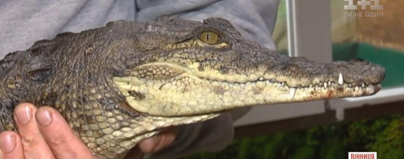 В Виннице супруги разводят крокодилов в торговом центре
