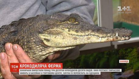 Винничане развели более трех десятков крокодилов десяти видов