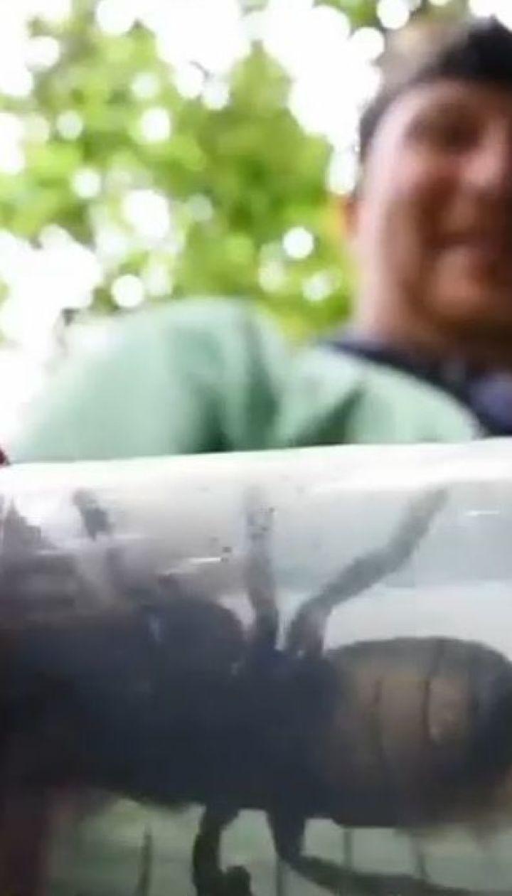 В Індонезії виявили найбільшу бджолу у світі