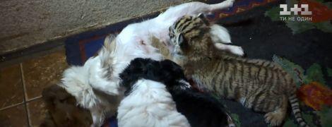 В Запорожье собака-дворняга выкормила отвергнутого матерью тигренка