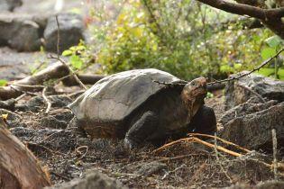 Ученые нашли гигантскую черепаху, которую считали вымершей