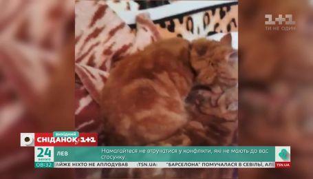 """Смешные видео котов и собак от зрителей """"Сниданка с 1+1"""""""