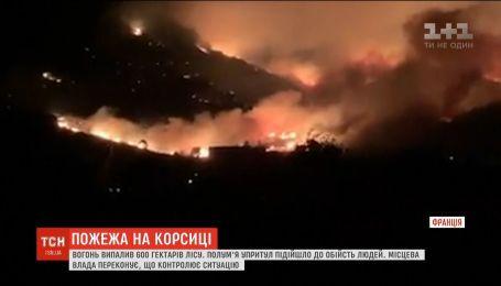 Огонь выжег 600 гектаров леса на французской Корсике