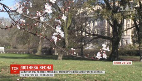 В Лондоне распустились деревья и зацвели нарциссы