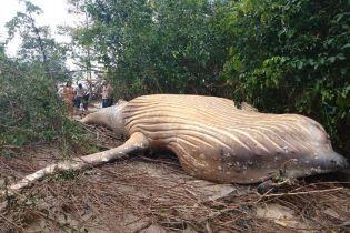 Биологи потрясены: в бразильских джунглях загадочно оказался мертвый кит