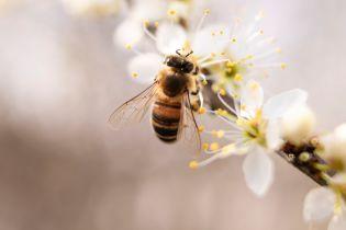 Исследователи заметили, что пчелы стали меньше танцевать – все из-за людей