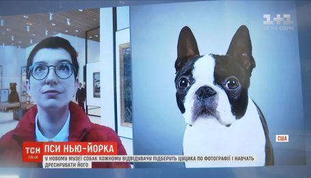 У Нью-Йорку в музеї собак відвідувачам підбирають цуцика за фотографією