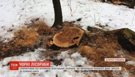В Днепропетровской области работники СБУ задержали нелегальных лесорубов