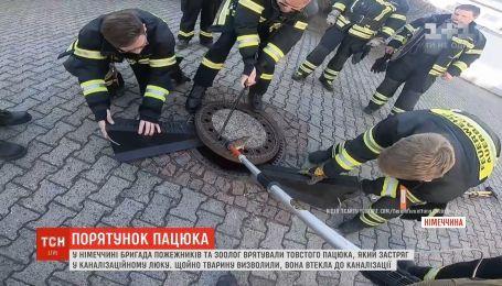 В Германии бригада пожарных и зоолог спасли толстую крысу