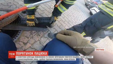 У Німеччині пожежники врятували гладкого щура, який застряг в люку