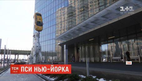 В Нью-Йорке под детским госпиталем установили далматинца, который держит настоящее такси