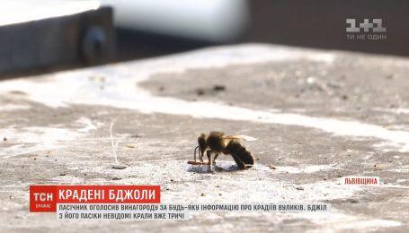 Пасічник з Львівщини пообіцяв тисячу доларів за інформацію про крадіїв його вуликів