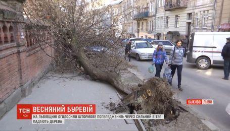 На Львівщині штормовий вітер валить дерева і зриває дахи