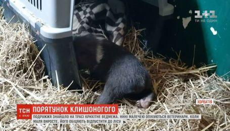 У Хорватії подружжя знайшло на узбіччі дороги дитинча ведмедя