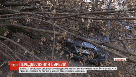 Во Львовской области объявили штормовое предупреждение из-за сильных порывов ветра