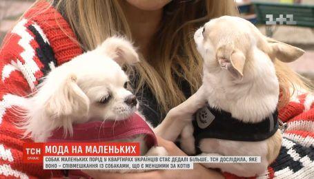 Мода на маленьких: какая разница между большими и маленькими собаками