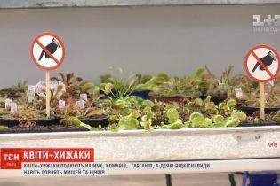 Киевлянка собрала наибольшую в Украине коллекцию цветов-хищников, что охотятся на мух и тараканов