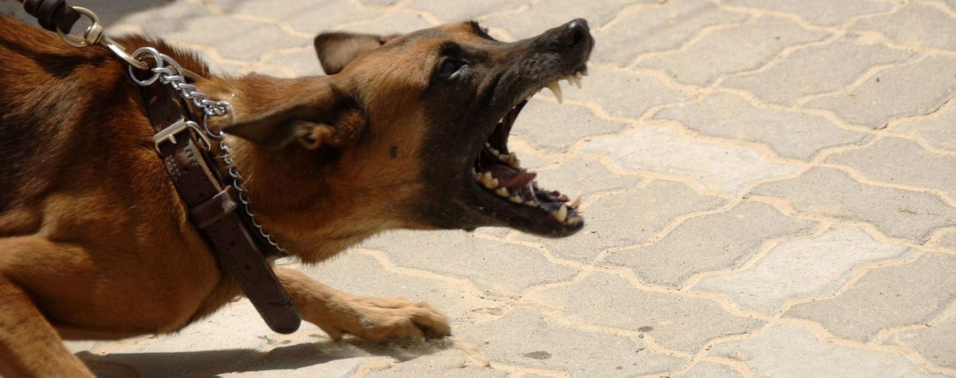 На Львовщине на копа натравили собаку: патрульный в больнице