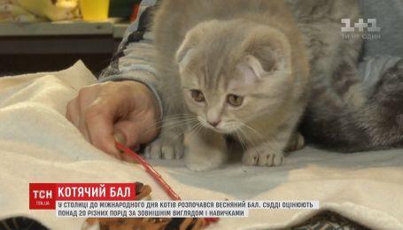 У столиці до міжнародного дня котів розпочався весняний бал