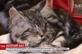 Весенний бал кошек в Киеве покажет украинцам редкие породы четвероногих