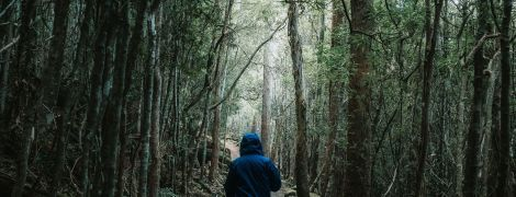 Мир отмечает день защиты лесов. Интересные факты