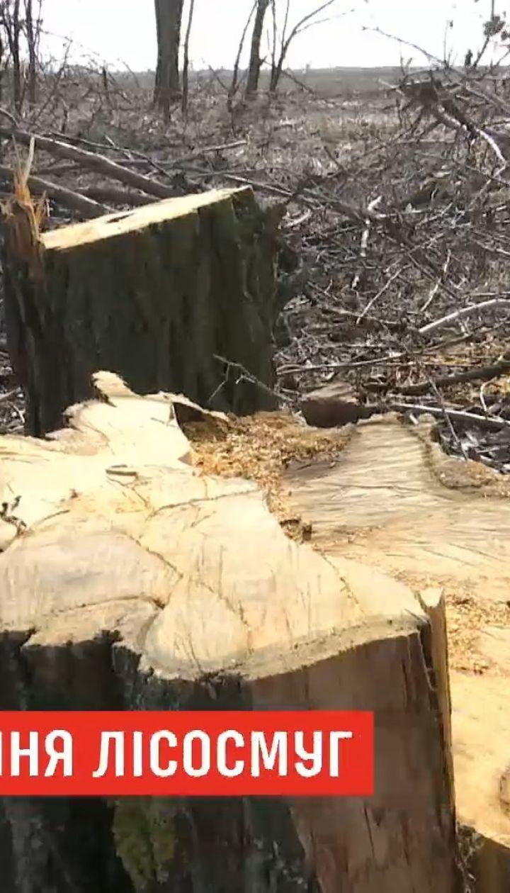 В Херсонской области назревает экологическая катастрофа из-за вырубки лесополос