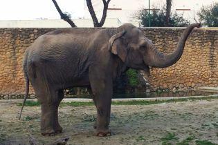 """В Іспанії померла """"насумніша у світі"""" слониха після 43 років абсолютної самотності"""