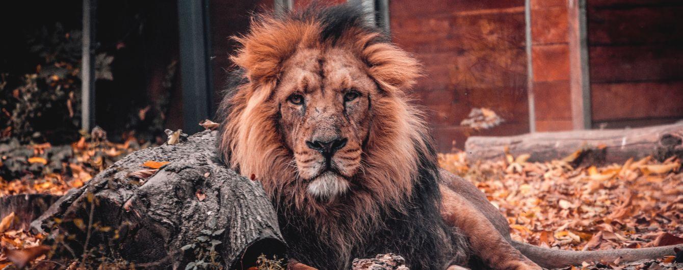 В Южной Африке слон затоптал браконьера, а лев съел его тело