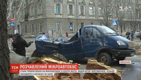 В центре Николаева старый тополь упал на микроавтобус