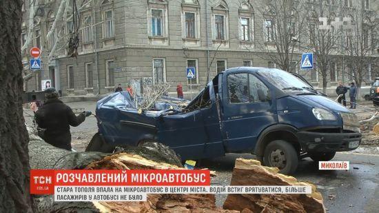 У Миколаєві тополя розчавила мікроавтобус. Водій встиг вискочити із автомобіля