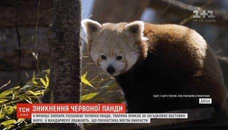 Із зоопарку у французькому місті Овернь загадково зникла червона панда