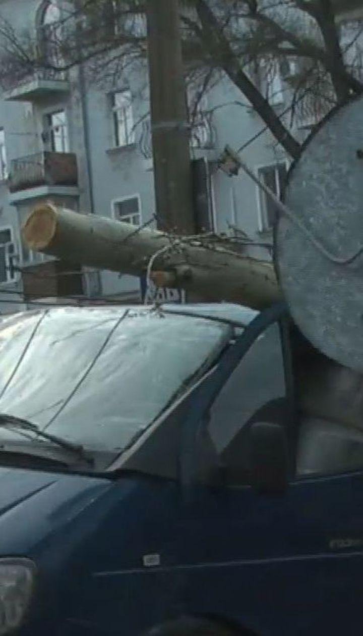 В Николаеве большой тополь раздавил микроавтобус прямо во время движения