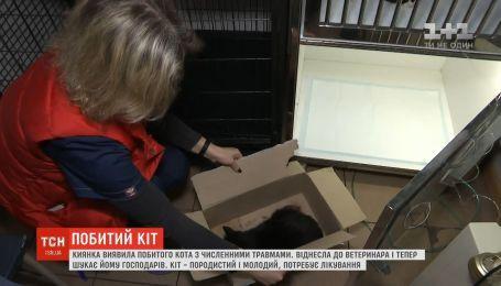 С разбитой челюстью и изуродованным глазом: киевлянка обнаружила кота с многочисленными травмами