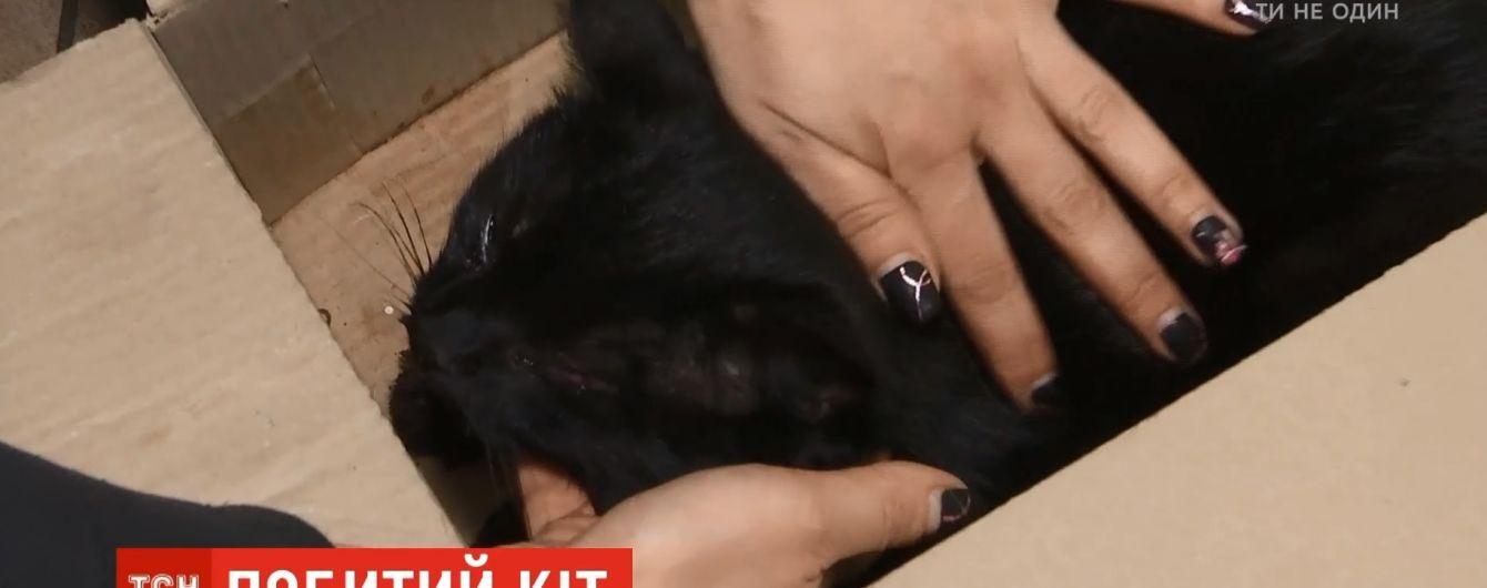 В столице женщина нашла и спасла породистого кота, а теперь разыскивает хозяина