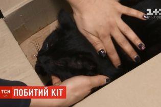 У столиці жінка знайшла та врятувала породистого кота, а тепер розшукує господаря