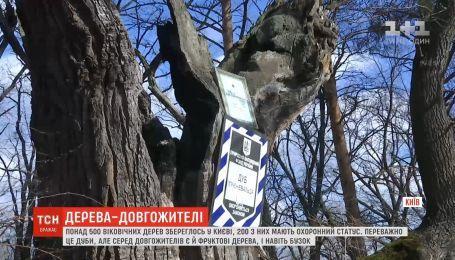 У столиці збереглися понад 500 віковічних дерев