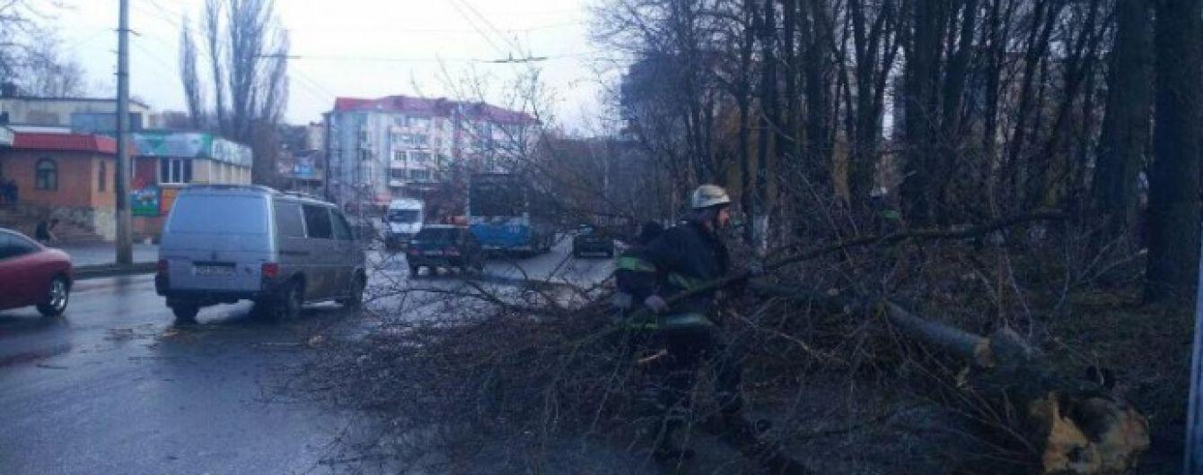 В Виннице посреди улицы дерево упало на ребенка. Девочка погибла