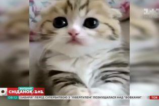 Кумедні відео домашніх улюбленців від глядачів Сніданку з 1+1 47a858211f5f9