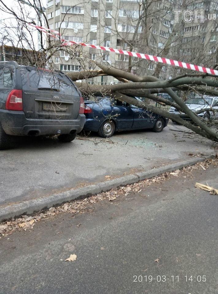 Дерево привалила машину в Києві_3