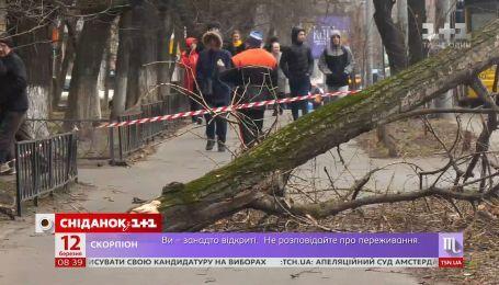 Последствия урагана: кто должен следить за состоянием деревьев в городах Украины