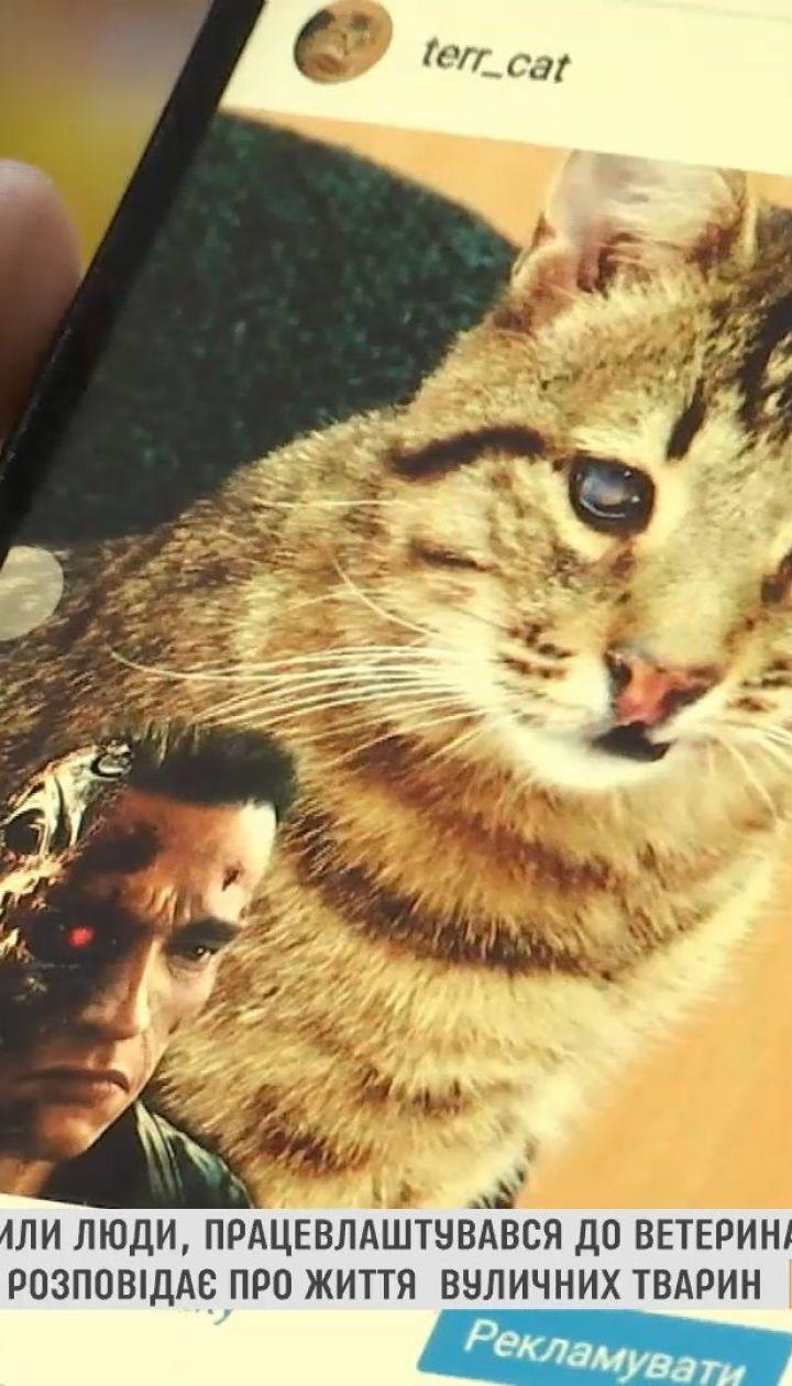 В Чернигове кот через социальные сети рассказывает о бездомных животных