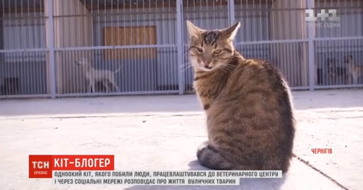Черниговский бездомный кот завел блог в Instagram, где рассказывает о жизни уличных животных