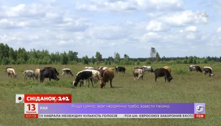 Украина сможет поставлять молочную продукцию в Оман - Экономические новости