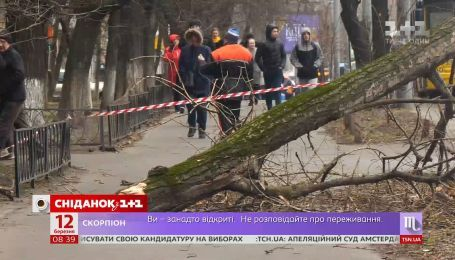 Наслідки буревію: хто має стежити за станом дерев у містах України